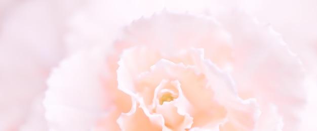 Abstract sfondo floreale rosa pallido fiore di garofano macro fiori sullo sfondo per le vacanze brand