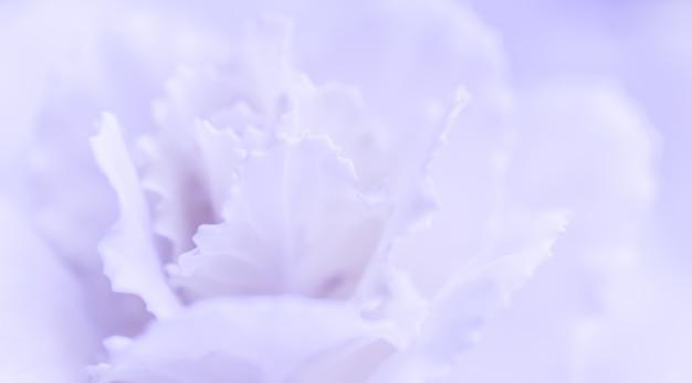 Abstract sfondo floreale viola pallido fiore di garofano macro fiori sullo sfondo per le vacanze brand