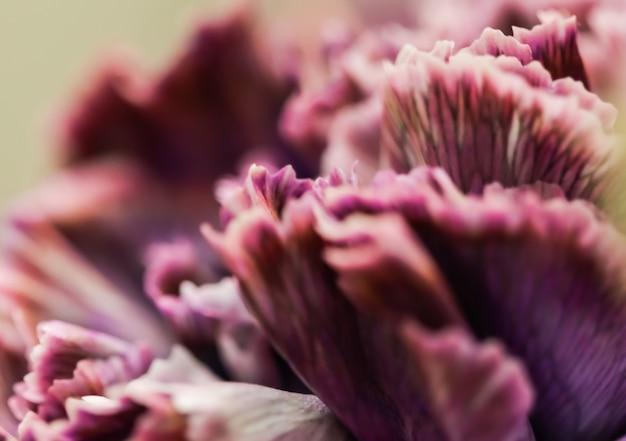 Sfondo floreale astratto viola fiore di garofano macro fiori sullo sfondo per il design del marchio di vacanza