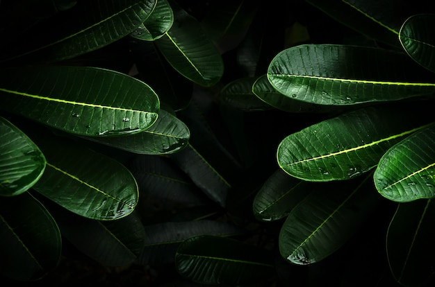 Texture astratta foglia verde foglia tropicale natura sfondo