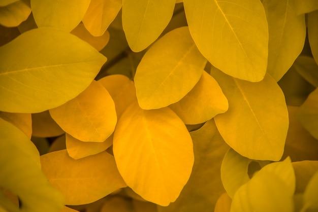 Estratto, foglie verdi, struttura, natura, fondo