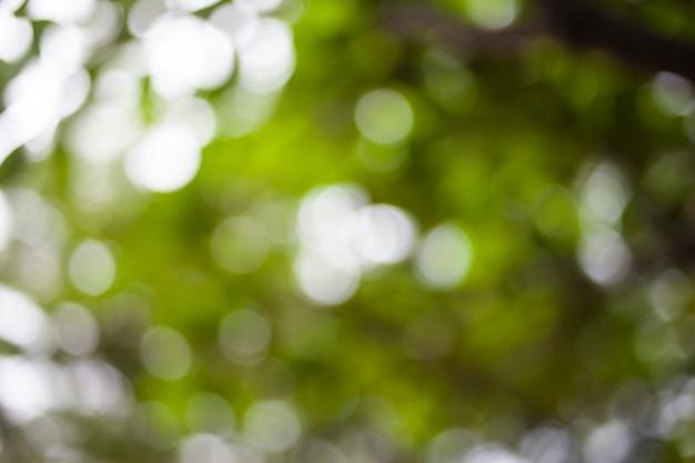 Fondo verde astratto della natura.