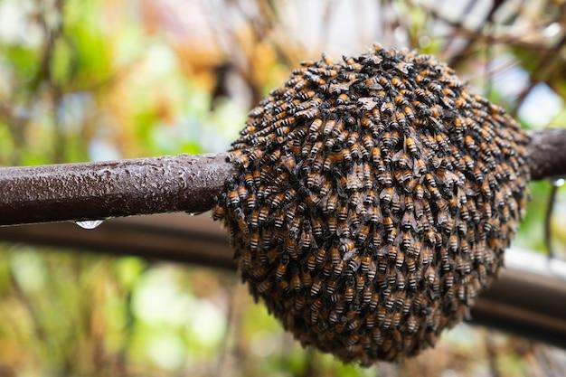 La struttura astratta esagonale è a nido d'ape dall'alveare