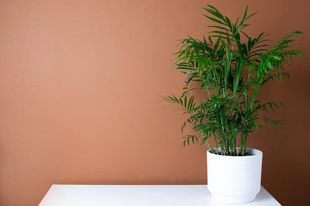 Interno moderno astratto con pianta verde sulla tavola, vista laterale dello spazio della copia del fondo arancio scuro della parete