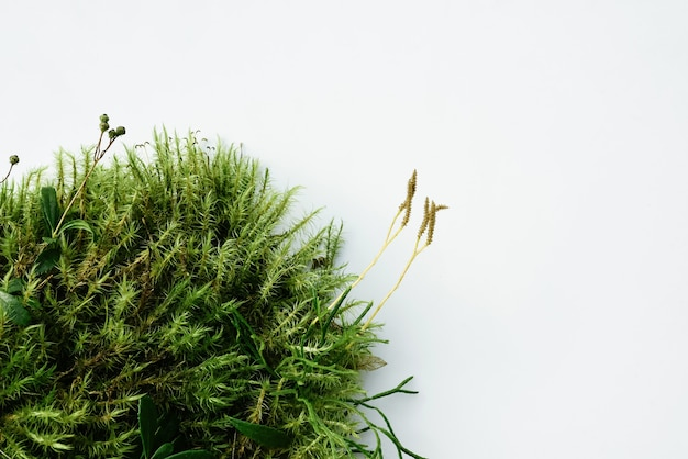 Sfondo naturale astratto, podio per cosmetici naturali dal muschio della foresta