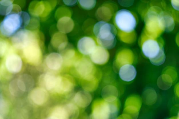 Estratto, fondo del bokeh della natura, fogliame verde della foresta. natura verde in stile sfocato per un design creativo.
