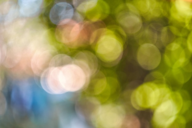 Natura astratta sfondo bokeh fogliame verde della foresta