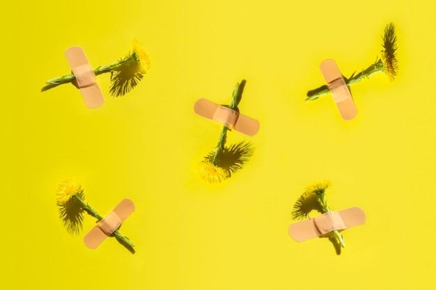 Modello astratto di fiori freschi di farfara sotto cerotto adesivo