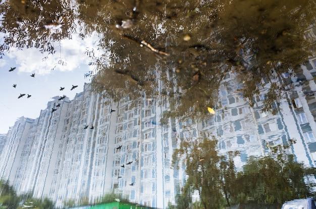 Riflessione astratta di una strada cittadina in una pozza di pioggia. uccelli in volo