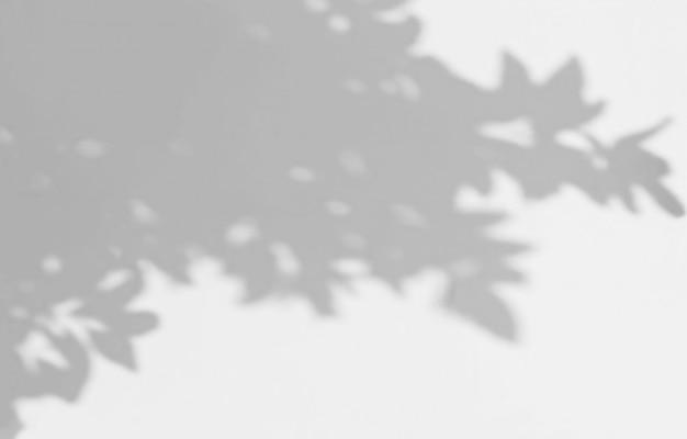 Ombra astratta delle foglie su un fondo bianco della parete