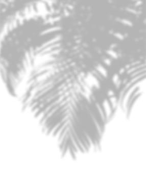 Ombra astratta di foglie di palma su uno sfondo bianco