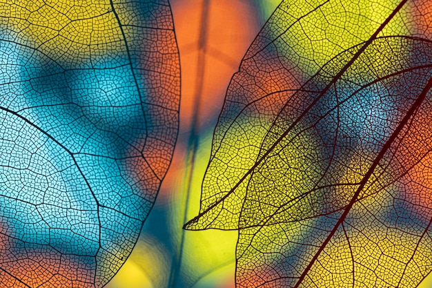 Foglie colorate trasparenti astratte Foto Premium