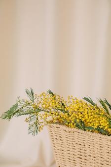 Vaso vacanza in acacia dealbata fiori freschezza brillante