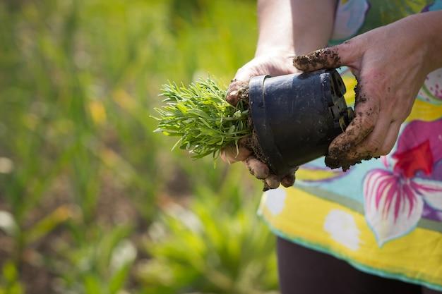 Una donna maggiore attiva che fa il giardino lavora sul suo enorme giardino botanico durante la bella primavera / estate