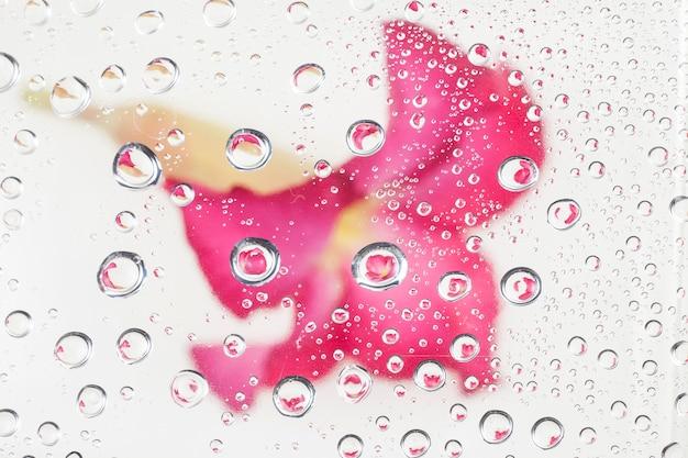Adenium in sfondo goccia d'acqua.