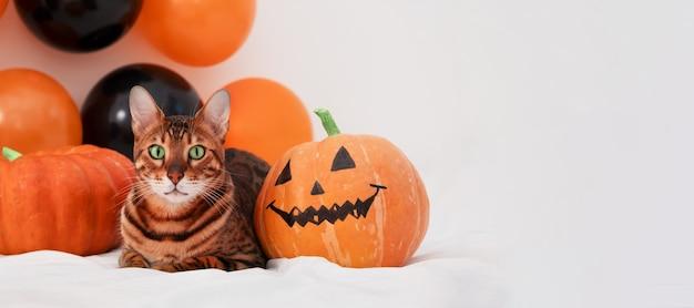 Adorabile gatto bengala sdraiato sul letto faccia horror zuccabellissimo animale domestico il giorno di happy halloweencopia spazio