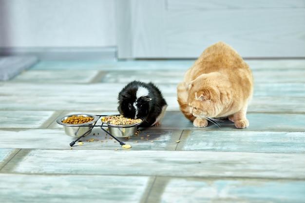 Adorabile gatto e cavia mangiare al chiuso a casa