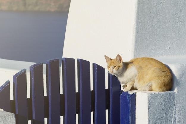Adorabile gatto seduto sul gradino. architettura bianca e blu sull'isola di santorini, in grecia.