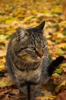 Adorabile gatto cammina nel parco d'autunno
