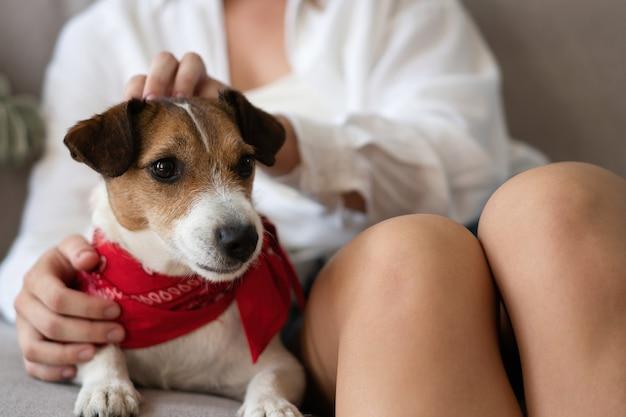 Adorabile cane tra le braccia del suo affettuoso proprietario. cane amorevole tra le braccia del suo proprietario a casa