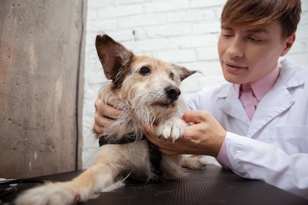 Adorabile soffice cane di razza mista rifugio con le sue zampe esaminate dal veterinario professionista