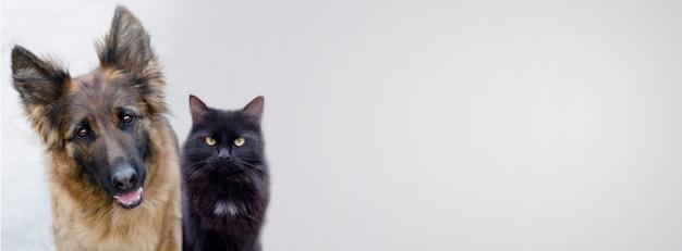 Adorabile cane pastore tedesco e grande gatto nero su uno striscione con spazio per il testo