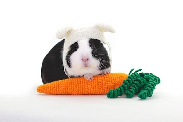 Adorabile cavia vestita con un cappello bianco con una carota isolata su bianco