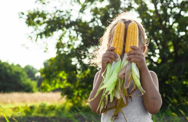 Adorabile bambina che gioca in un campo di mais in una bella giornata autunnale. bambino grazioso che tiene una pannocchia di mais. raccolta con i bambini. attività autunnali per bambini.