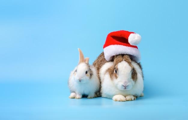 Adorabile madre coniglio nel cappello rosso di natale e coniglietto neonato seduto su sfondo blu. festeggia le vacanze con l'animale domestico del coniglietto di natale