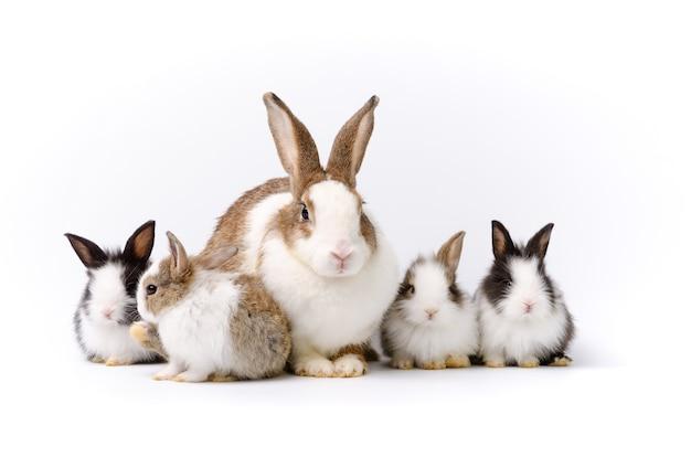 Madre adorabile con quattro conigli del bambino isolati