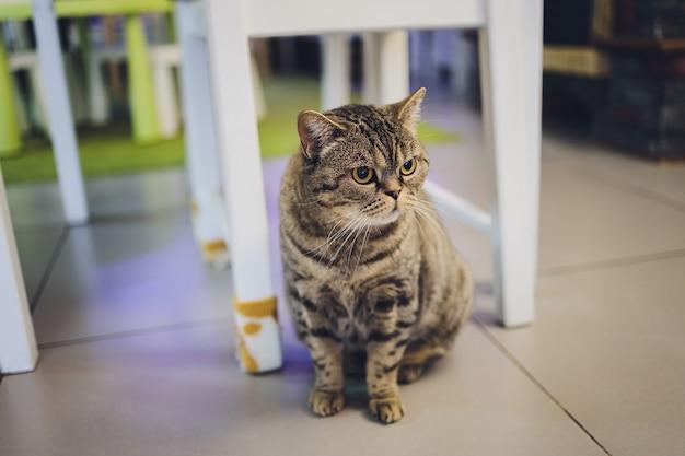 Adorabile gatto soriano seduto sul pavimento della cucina fissando la telecamera.