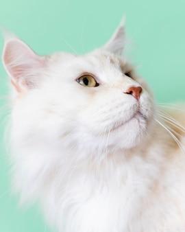 Adorabile gattino bianco con parete monocromatica dietro di lei