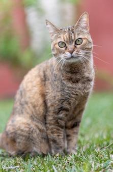 Gatto adulto con gli occhi verdi seduto in giardino che riposa e guarda la macchina fotografica.