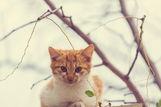 Gatto domestico adulto che si siede nell'erba