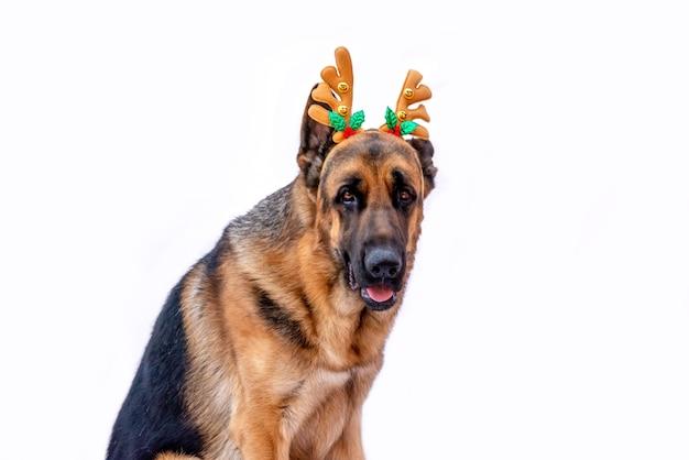 Un pastore tedesco adulto in costume natalizio con corna di cervo