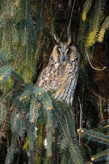 Gufo adulto con bellissimi occhi arancioni e piumaggio appollaiato sull'albero