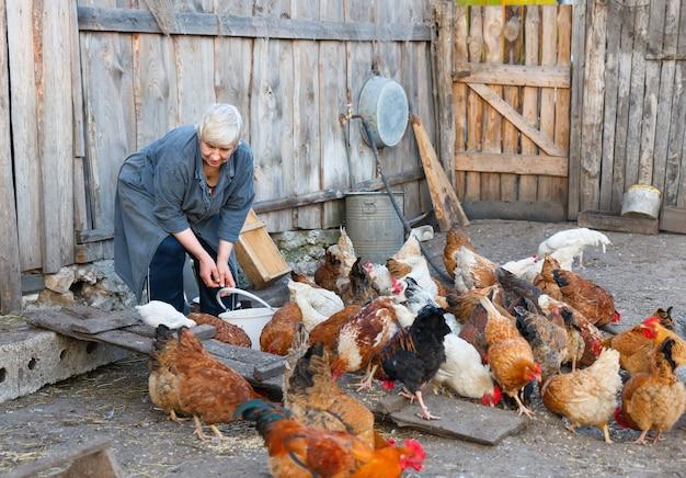 Gruppo di donna adulta di polli della fattoria