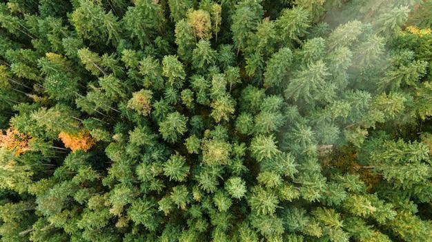 Foto aerea con drone di foresta e nuvole nelle alpi bavaresi, germania