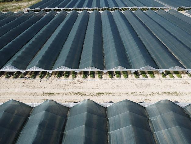 Vista aerea del drone di enormi aree di serra per la coltivazione di fragole in serra agricoltura agricoltura