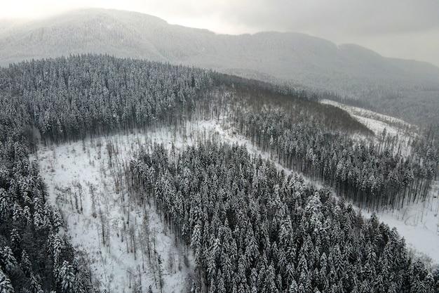 Paesaggio nebbioso aereo con alberi di pino sempreverdi ricoperti di neve fresca caduta dopo abbondanti nevicate nella foresta di montagna invernale in una fredda serata tranquilla.