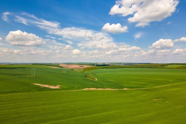 Vista aerea del paesaggio di campi agricoli coltivati verdi con colture in crescita in una luminosa giornata estiva.