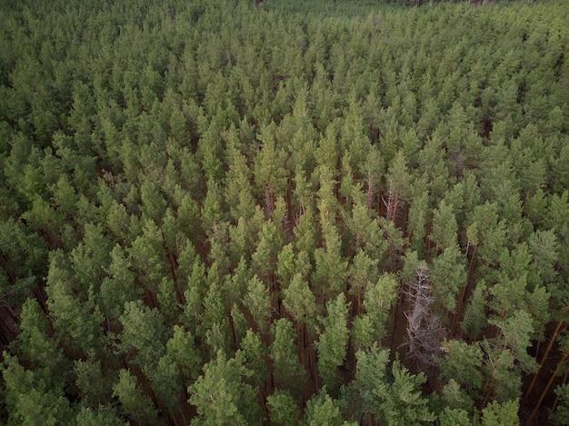 Foto aerea della pineta