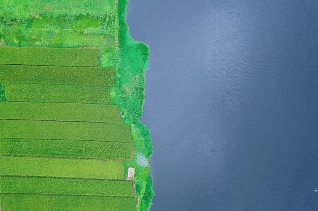 Foto aeree di risaie