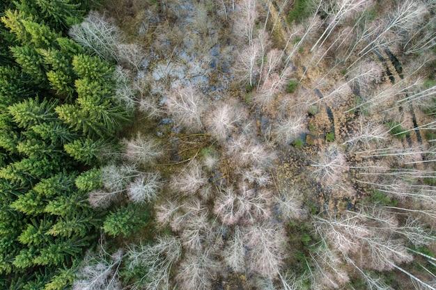 Ripresa aerea di betulle e abeti rossi