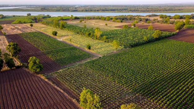 Vista aerea superiore del campo agricolo
