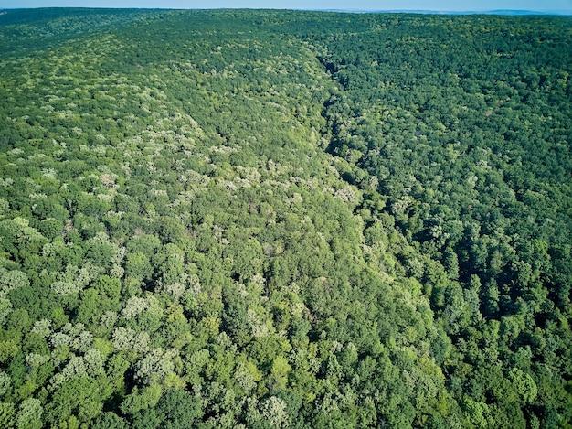 Vista aerea superiore degli alberi di autunno nel parco selvaggio nel mese di settembre