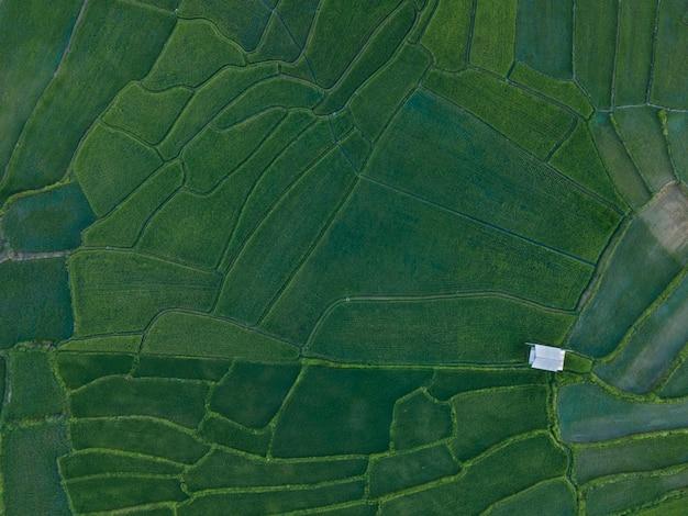 Vista aerea dall'alto di bellissime risaie verdi con una capanna in mezzo ai campi