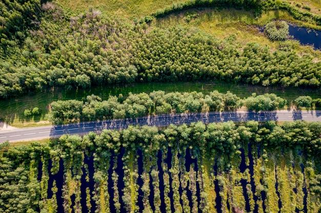 Vista aerea superiore di una strada di campagna attraverso un bosco di abeti in estate, lunghe ombre dagli alberi. palude nelle vicinanze
