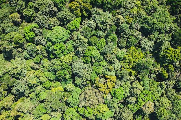 Vista aerea della foresta dall'alto, texture della vista della foresta dall'alto. lo sfondo è verde dalla giungla o dalla foresta pluviale.