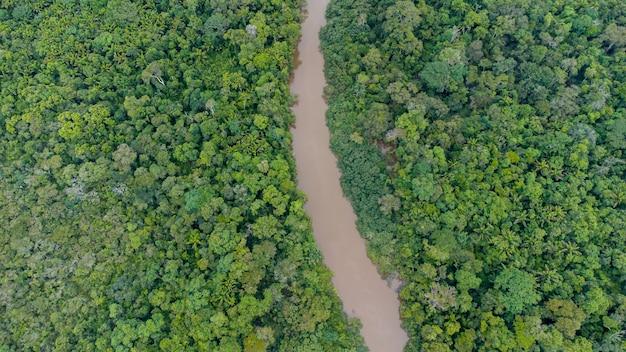 Vista aerea della foresta pluviale amazzonica in brasile, sud america. foresta verde. vista dall'alto.